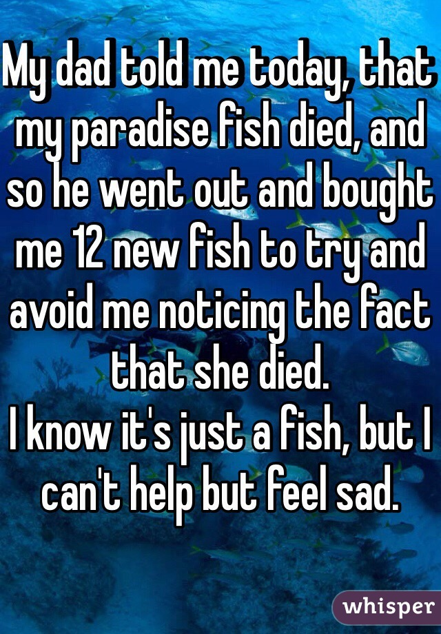 My dad told me today, that my paradise fish died, and so he went out and bought me 12 new fish to try and avoid me noticing the fact that she died.  I know it's just a fish, but I can't help but feel sad.