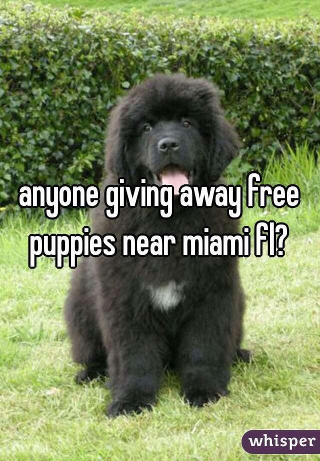 anyone giving away free puppies near miami fl?