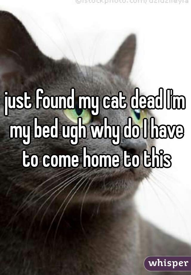 just found my cat dead I'm my bed ugh why do I have to come home to this