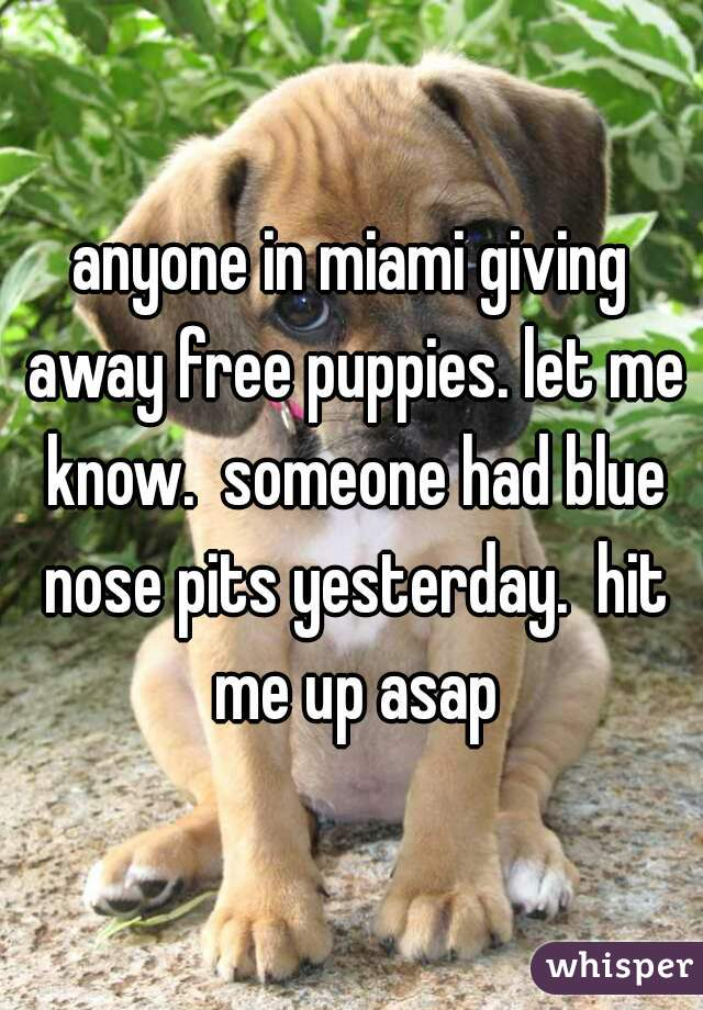 anyone in miami giving away free puppies. let me know.  someone had blue nose pits yesterday.  hit me up asap