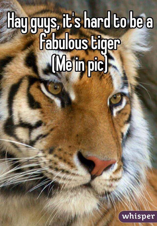 Hay guys, it's hard to be a fabulous tiger  (Me in pic)