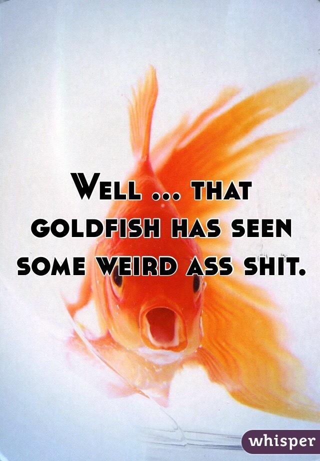 Well ... that goldfish has seen some weird ass shit.