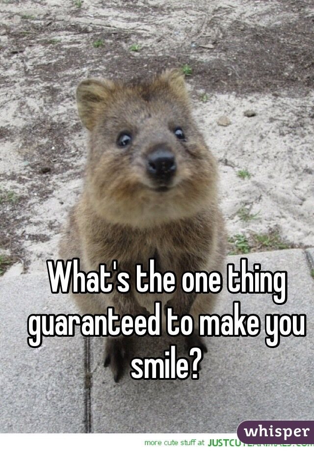 What's the one thing guaranteed to make you smile?