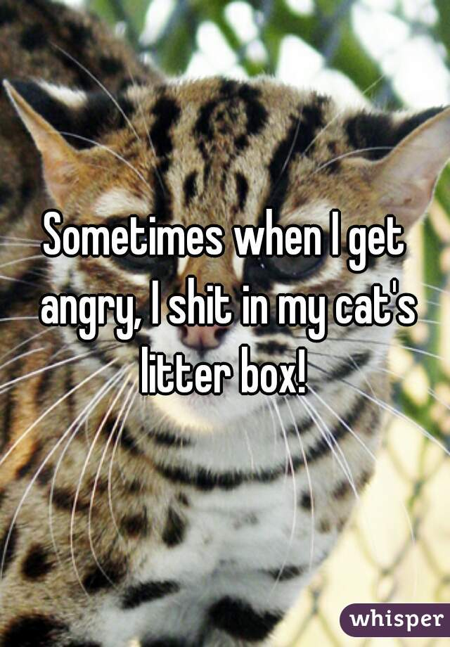 Sometimes when I get angry, I shit in my cat's litter box!