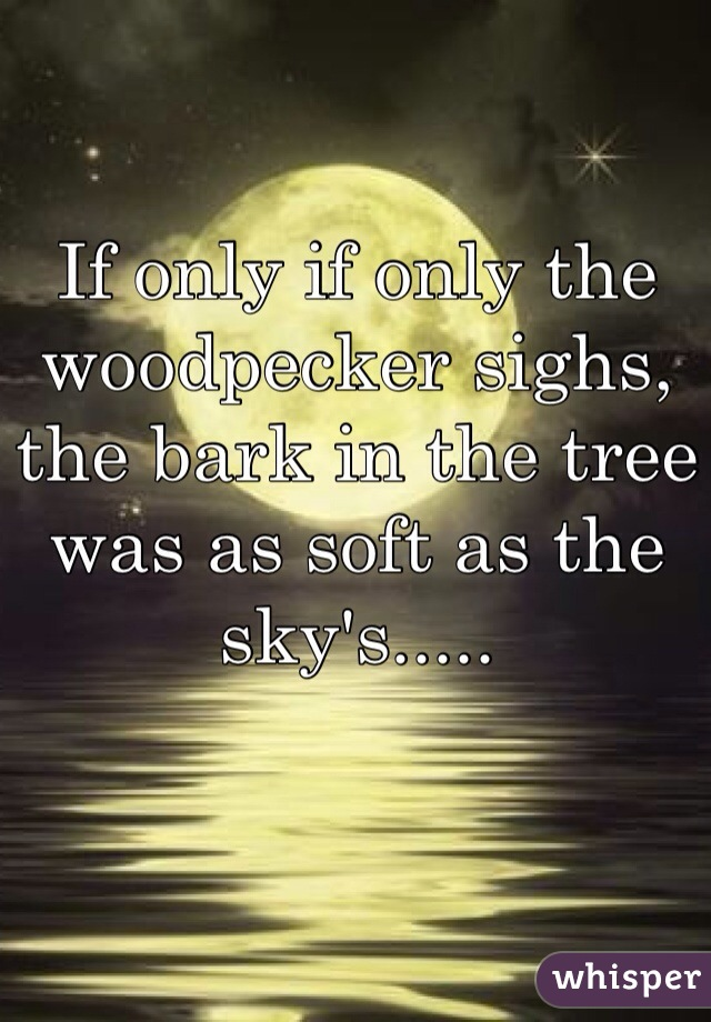 If only if only the woodpecker sighs, the bark in the tree was as soft as the sky's.....