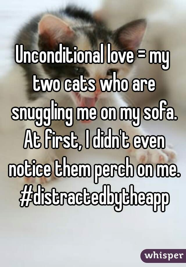 Unconditional love = my two cats who are snuggling me on my sofa. At first, I didn't even notice them perch on me. #distractedbytheapp