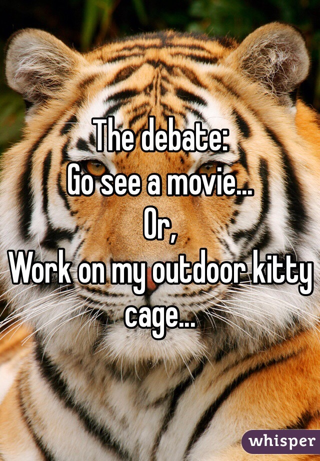 The debate: Go see a movie... Or, Work on my outdoor kitty cage...