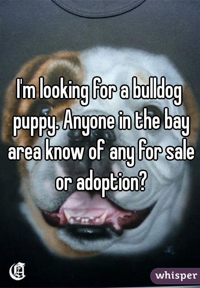 I'm looking for a bulldog puppy. Anyone in the bay area know of any for sale or adoption?
