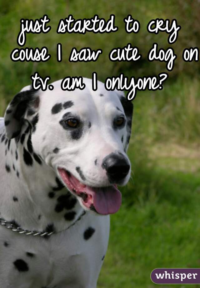 just started to cry couse I saw cute dog on tv. am I onlyone?