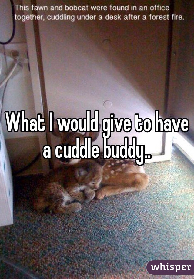 What I would give to have a cuddle buddy..