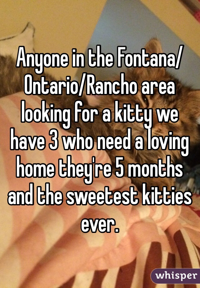 Anyone in the Fontana/Ontario/Rancho area looking for a kitty we have 3 who need a loving home they're 5 months and the sweetest kitties ever.