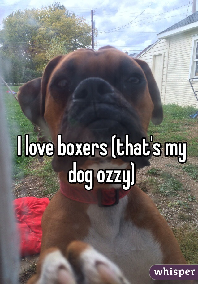 I love boxers (that's my dog ozzy)
