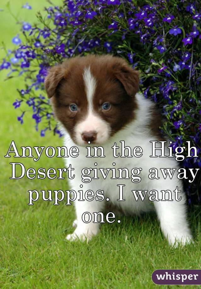 Anyone in the High Desert giving away puppies. I want one.