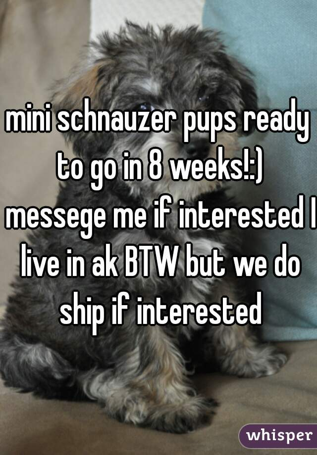 mini schnauzer pups ready to go in 8 weeks!:) messege me if interested I live in ak BTW but we do ship if interested