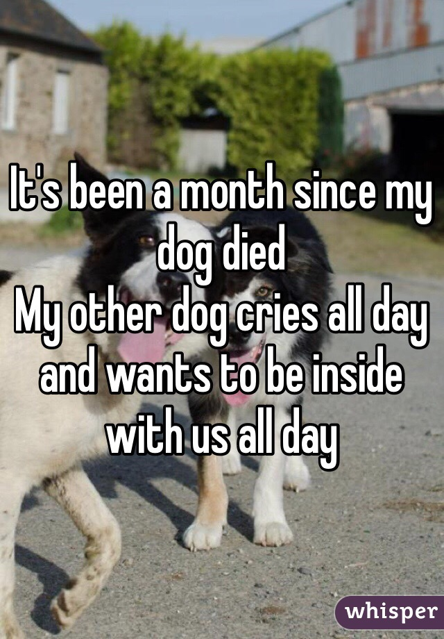It's been a month since my dog died  My other dog cries all day and wants to be inside with us all day