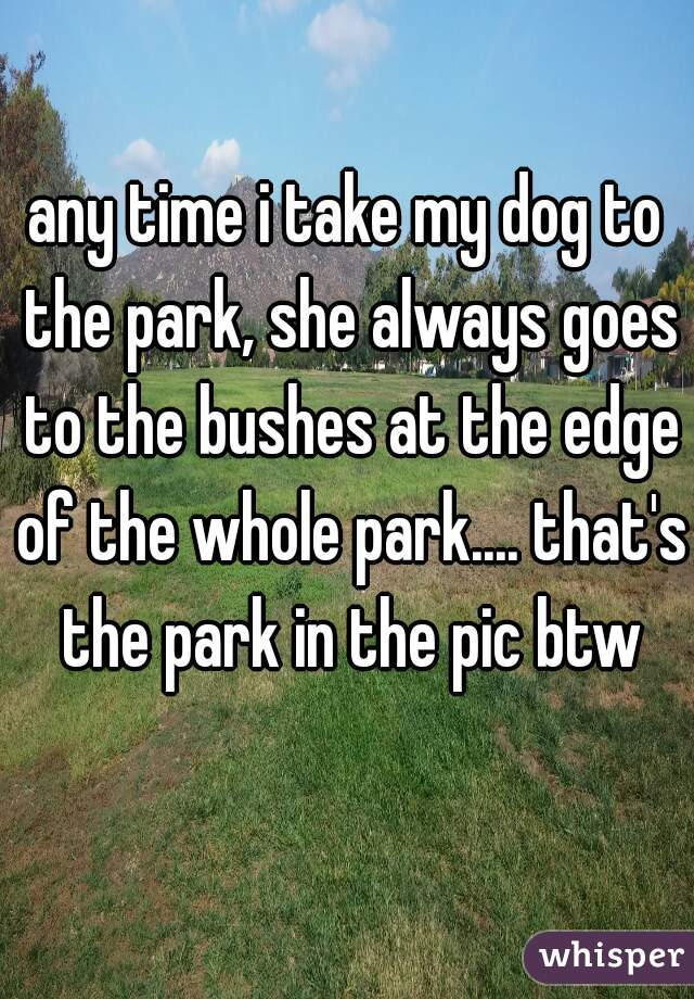 any time i take my dog to the park, she always goes to the bushes at the edge of the whole park.... that's the park in the pic btw