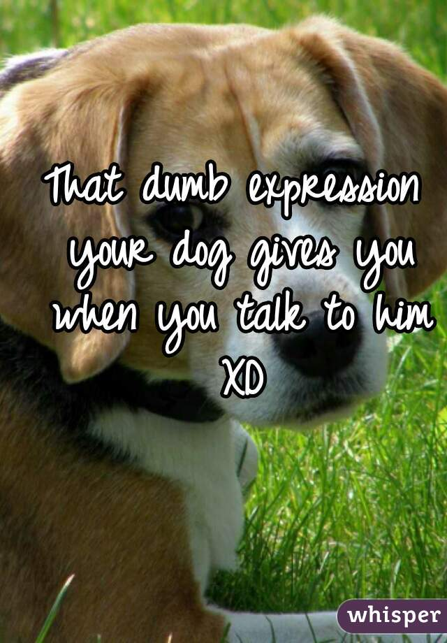 That dumb expression your dog gives you when you talk to him XD