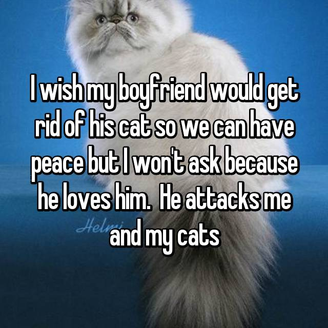 I wish my boyfriend would get rid of his cat so we can have peace but I won't ask because he loves him.  He attacks me and my cats