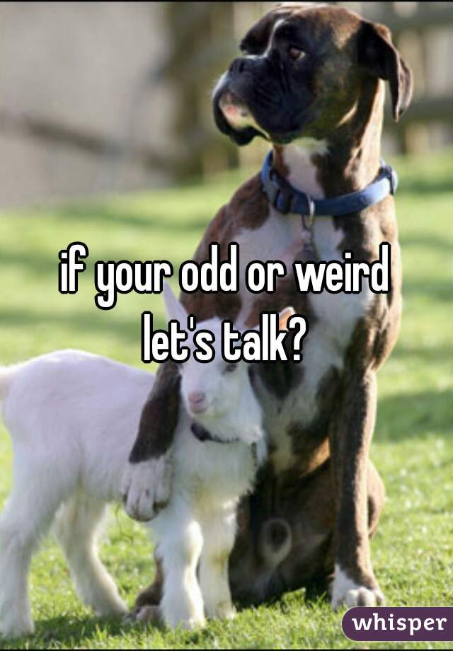 if your odd or weird let's talk?