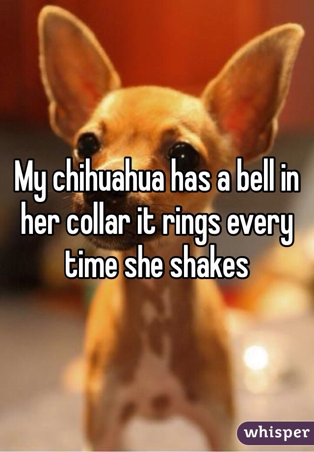 My chihuahua has a bell in her collar it rings every time she shakes