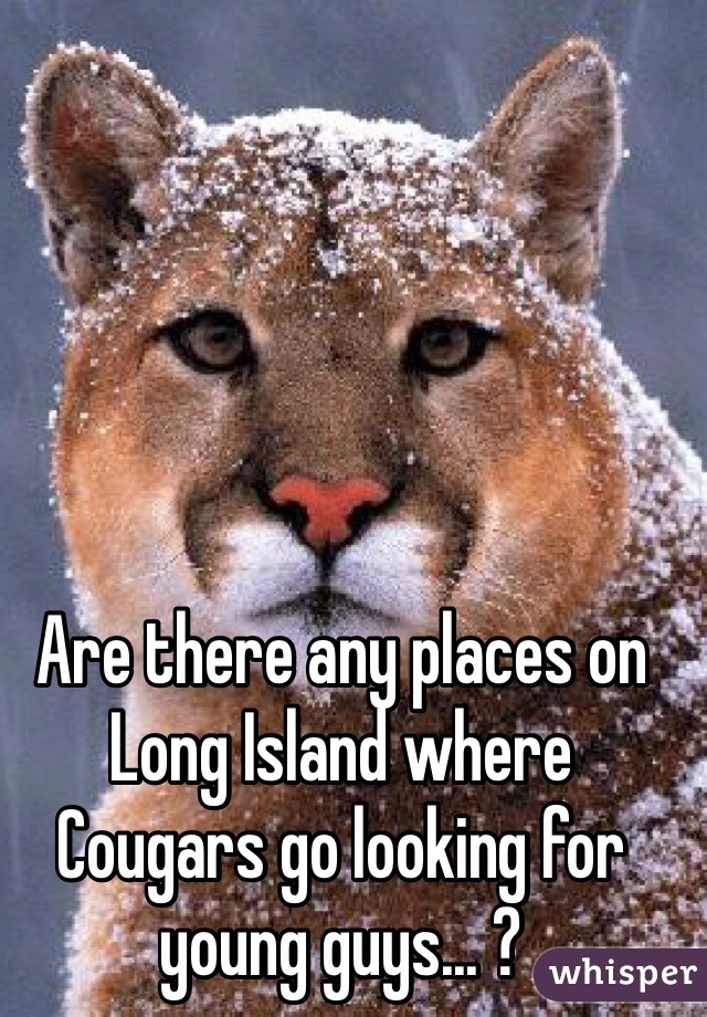 Are there any places on Long Island where Cougars go looking for young guys... ?