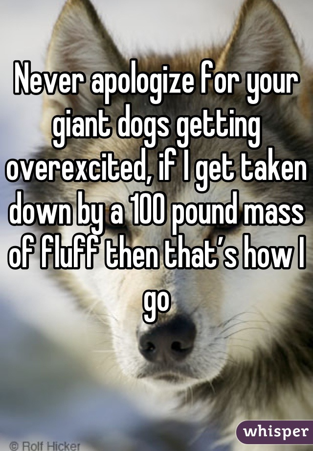Never apologize for your giant dogs getting overexcited, if I get taken down by a 100 pound mass of fluff then that's how I go
