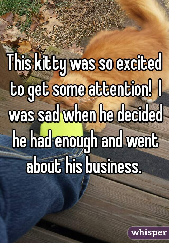 This kitty was so excited to get some attention!  I was sad when he decided he had enough and went about his business.