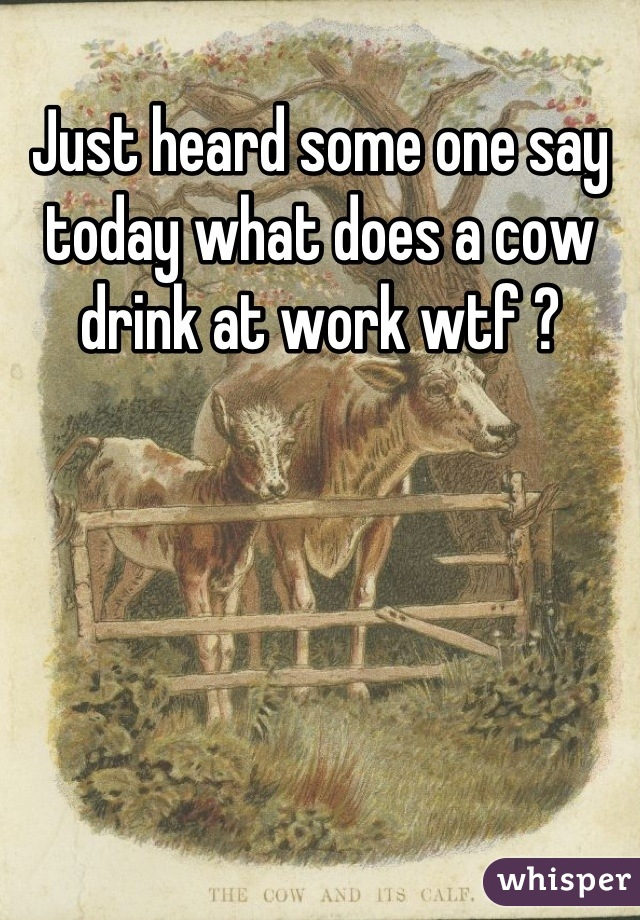 Just heard some one say today what does a cow drink at work wtf ?