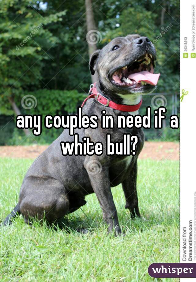 any couples in need if a white bull?