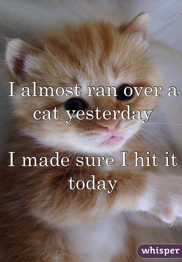 I almost ran over a cat yesterday  I made sure I hit it today