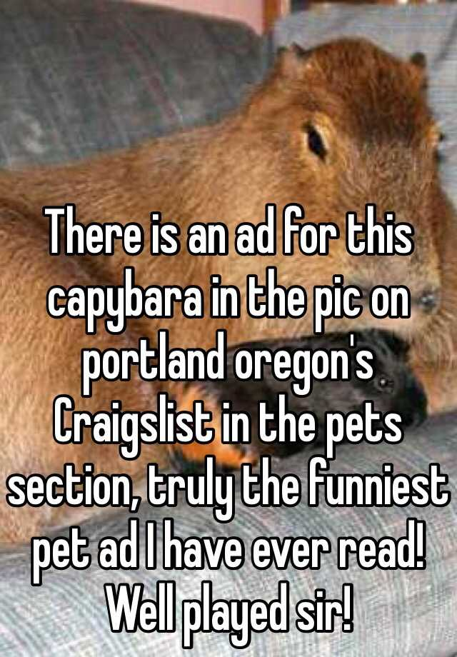 There is an ad for this capybara in the pic on portland ...