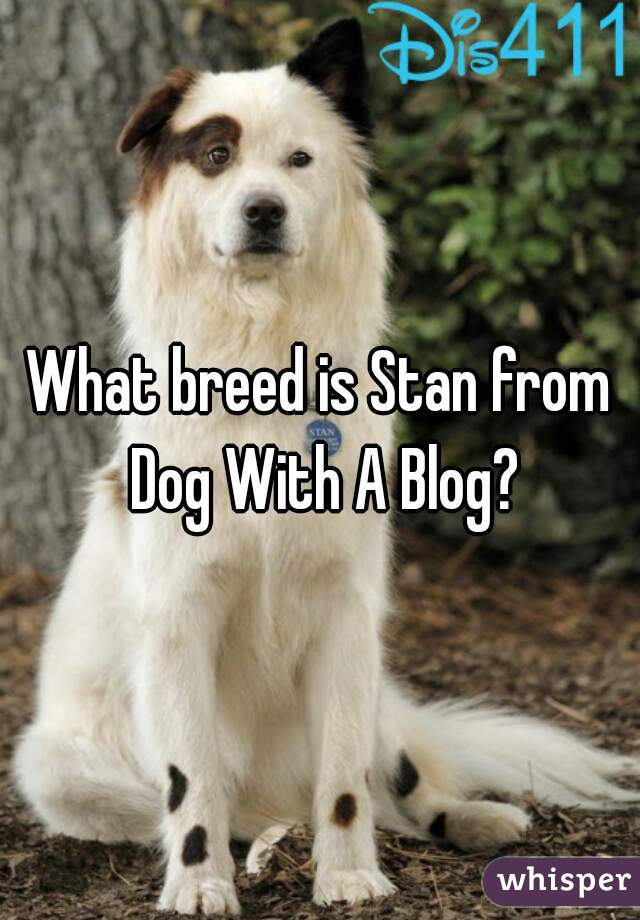 What Breed Is Stan From Dog With A Blog