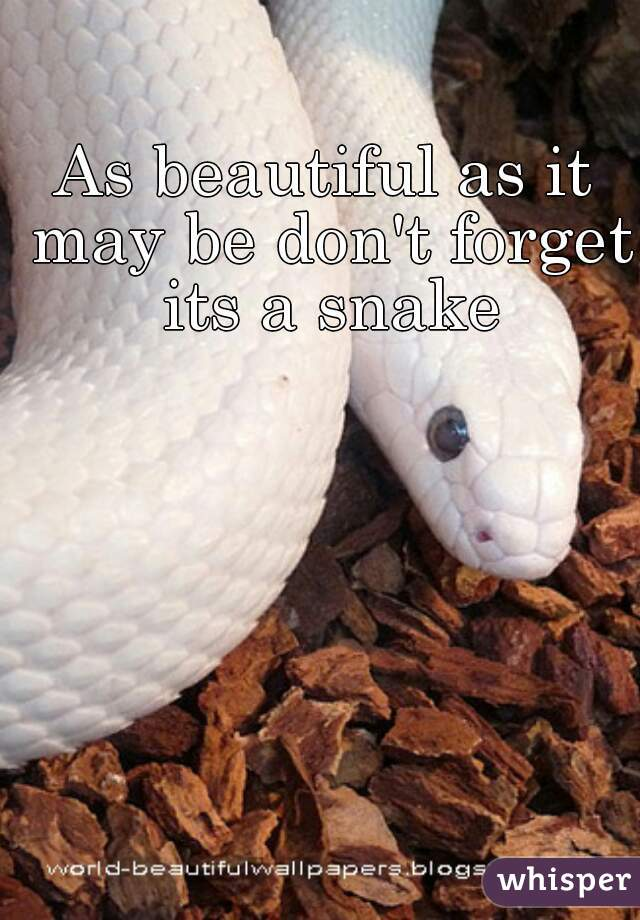 As beautiful as it may be don't forget its a snake