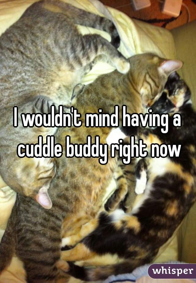 I wouldn't mind having a cuddle buddy right now