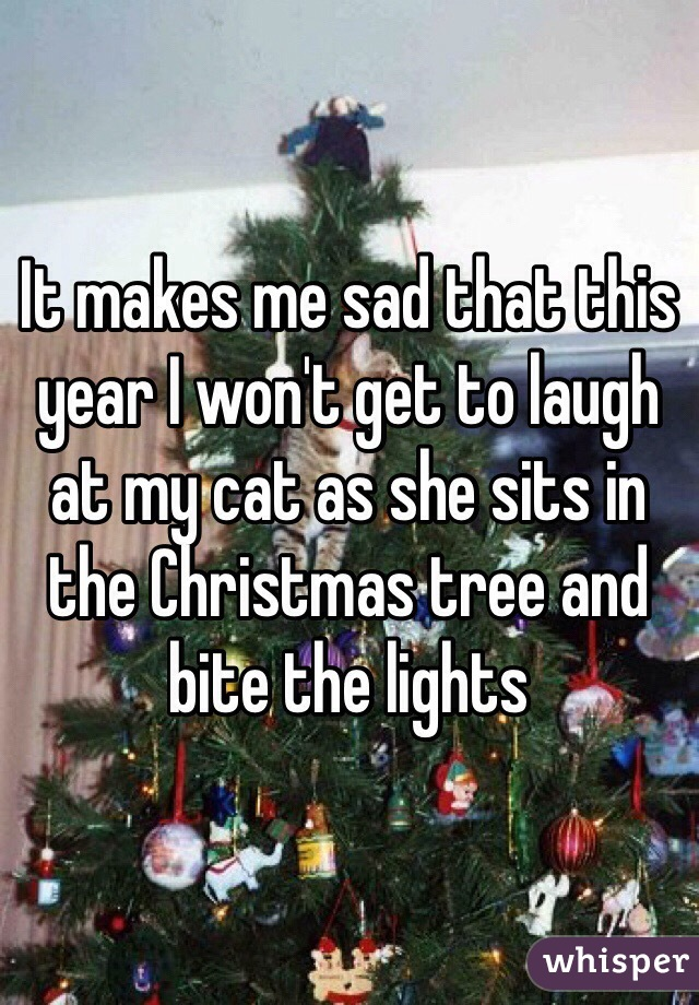 It makes me sad that this year I won't get to laugh at my cat as she sits in the Christmas tree and bite the lights