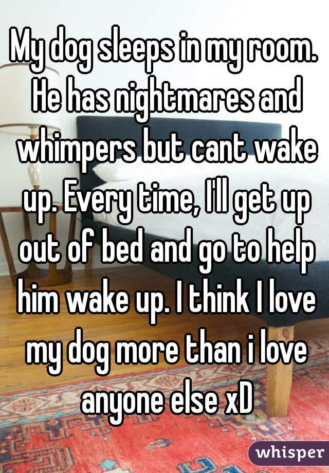 My dog sleeps in my room. He has nightmares and whimpers but cant wake up. Every time, I'll get up out of bed and go to help him wake up. I think I love my dog more than i love anyone else xD