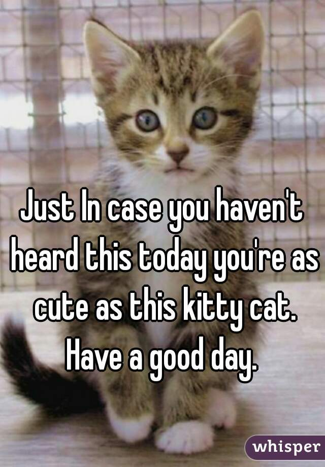 Just In case you haven't heard this today you're as cute as this kitty cat. Have a good day.