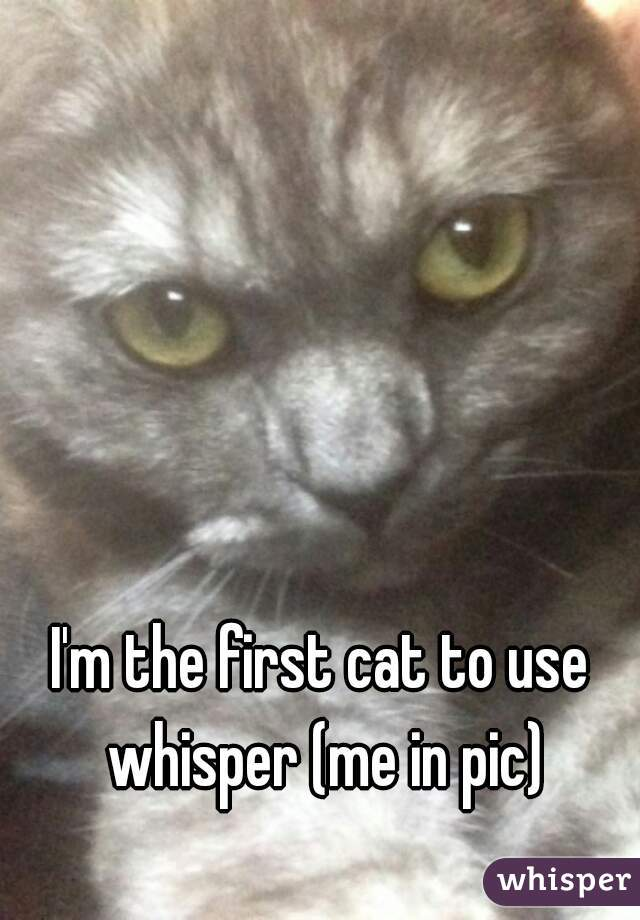 I'm the first cat to use whisper (me in pic)