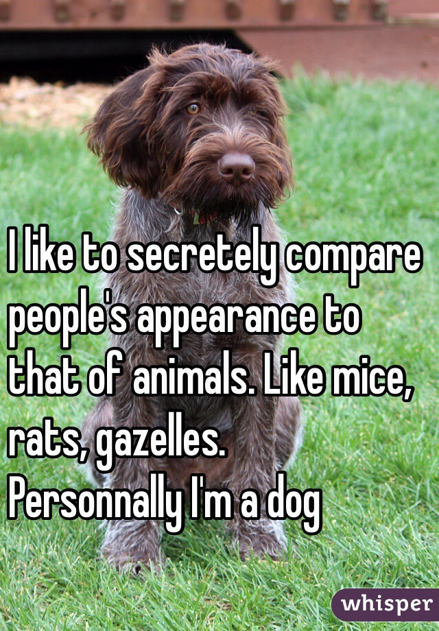 I like to secretely compare  people's appearance to  that of animals. Like mice, rats, gazelles. Personnally I'm a dog