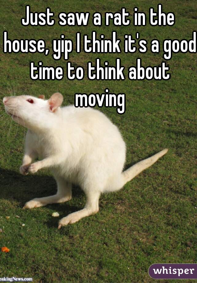 Just saw a rat in the house, yip I think it's a good time to think about moving