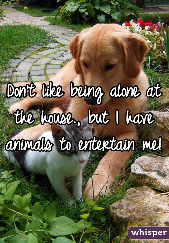Don't like being alone at the house., but I have animals to entertain me!