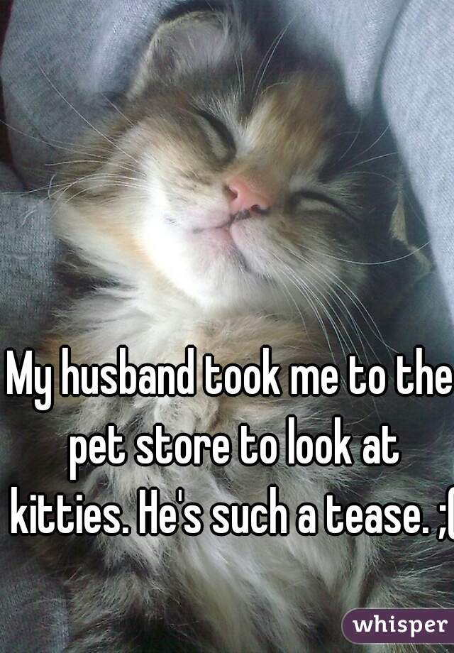 My husband took me to the pet store to look at kitties. He's such a tease. ;(