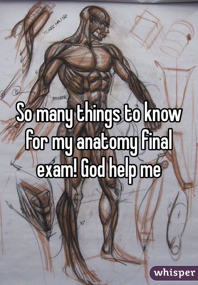 So Many Things To Know For My Anatomy Final Exam God Help Me