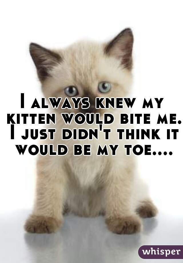 I always knew my kitten would bite me. I just didn't think it would be my toe....