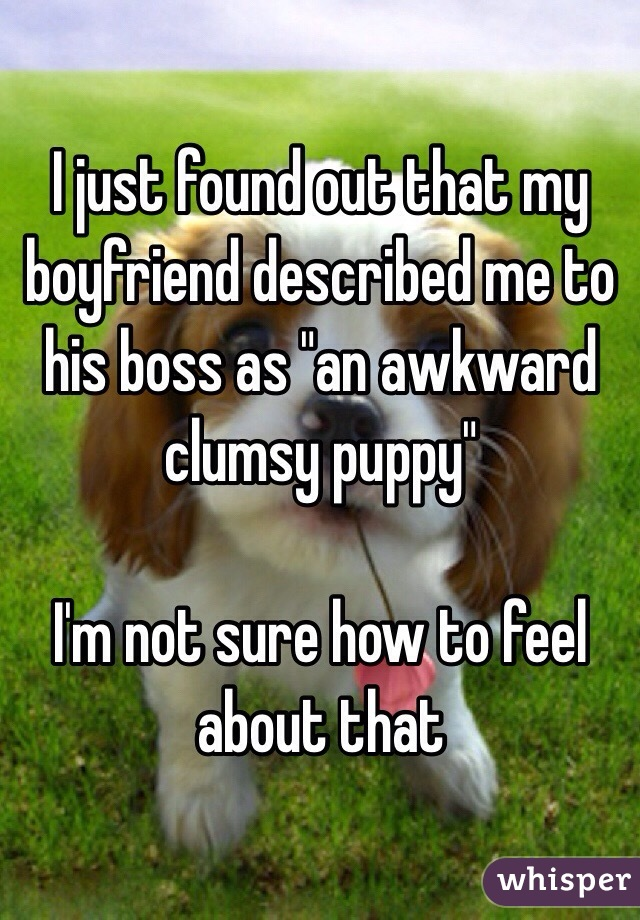 "I just found out that my boyfriend described me to his boss as ""an awkward clumsy puppy""  I'm not sure how to feel about that"