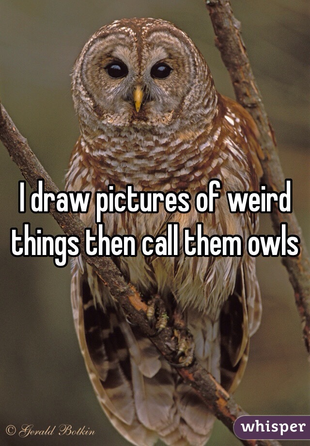 I draw pictures of weird things then call them owls