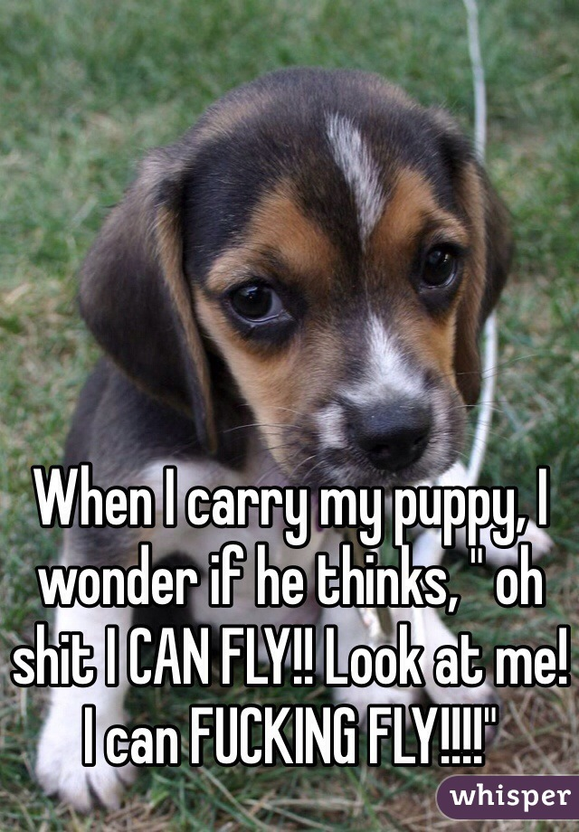 """When I carry my puppy, I wonder if he thinks, """" oh shit I CAN FLY!! Look at me! I can FUCKING FLY!!!!"""""""