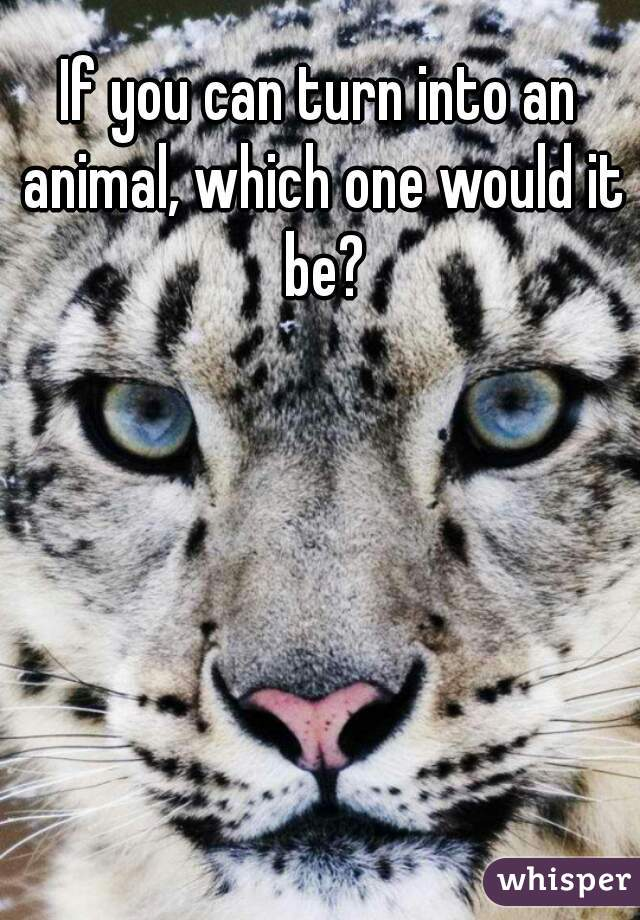 If you can turn into an animal, which one would it be?