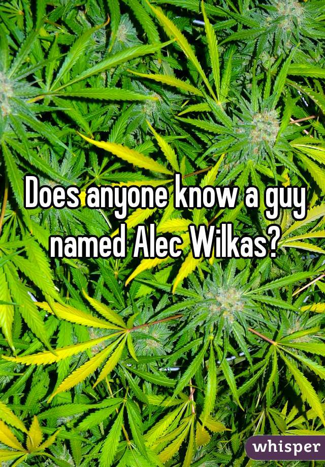 Does anyone know a guy named Alec Wilkas?