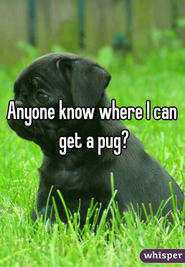 Anyone know where I can get a pug?